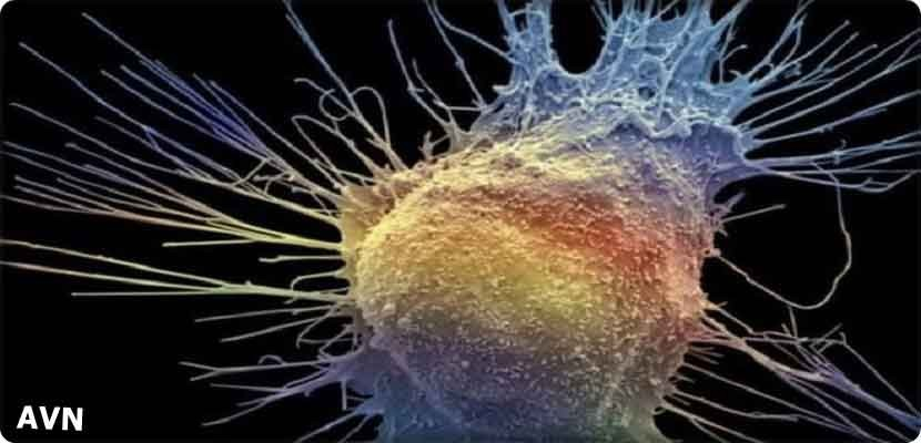 Prostate cancer, a new drug may save more lives