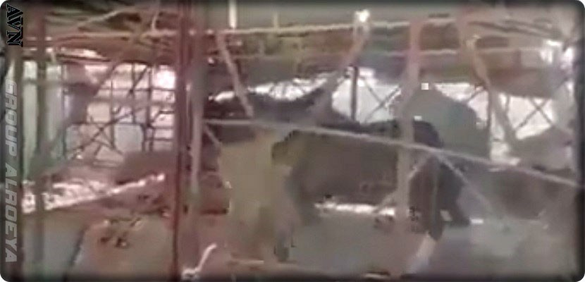 Shocking Video: Delivering a Living Horse Meal to the Lion