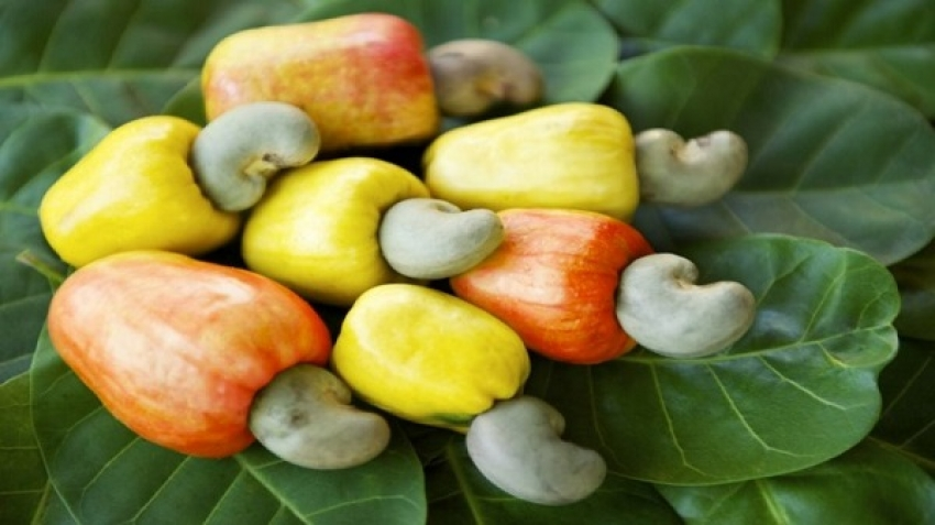 Why do we buy cashews peeled?
