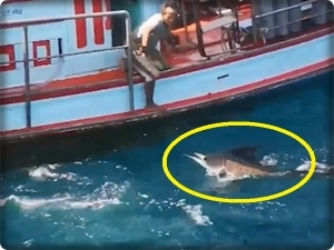 Rescue a tourist from the swordfish..Video