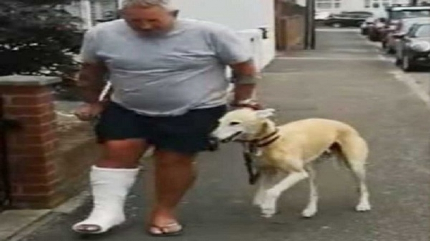 The dog's sympathy was a reason for him being disabled, video