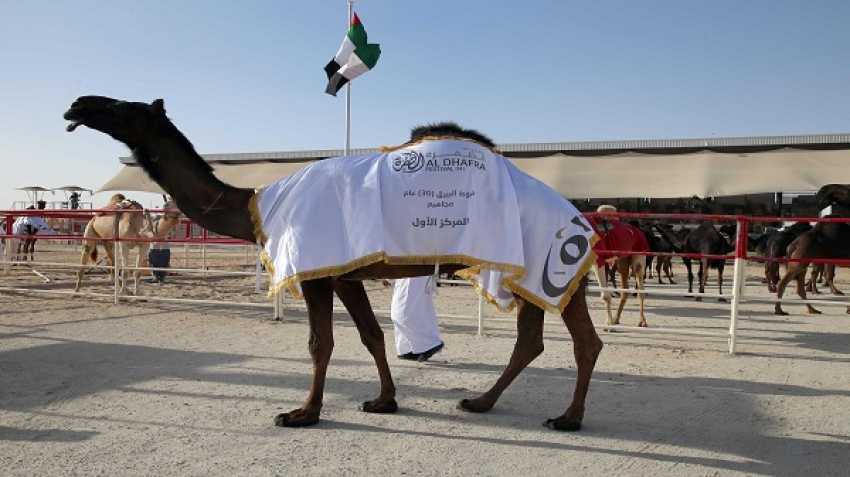 Al Dhafra Festival Concludes its 14th Edition