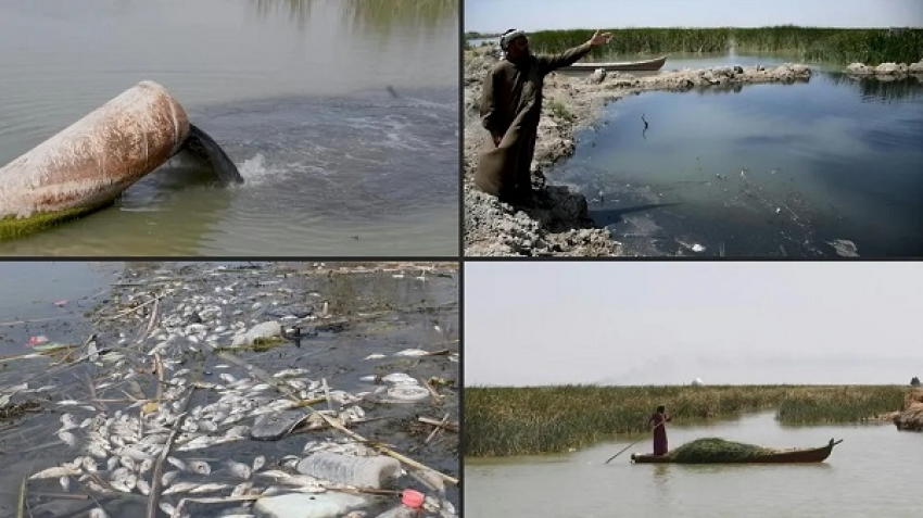 """Iraq: The Marshes of Chibayish ... """"The Garden of Eden"""" has become a living hell"""
