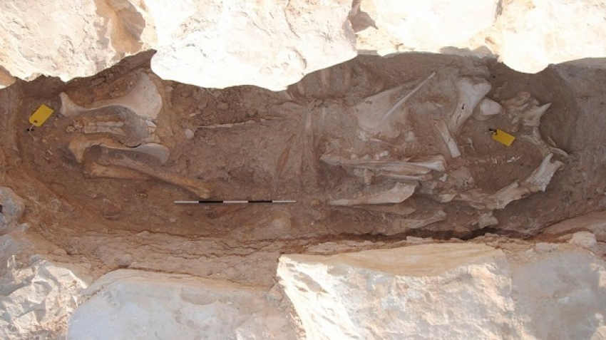 Qatar announces a new archaeological discovery in the Aseela cemetery